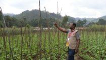 Caritas Congo Asbl et son réseau face à la sécurité alimentaire et aux capacités économiques des ménages ruraux :   PQ Secal II, un Programme rentable