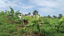 Kwilu : la Caritas Idiofa s'investit pour un développement par l'agriculture!