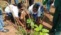 Sud-Ubangi : une campagne d'éducation environnementale sur la plantation des arbres organisée par la Caritas à Gemena