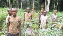 Ituri et Maï-Ndombe : les forêts des Aires du patrimoine Autochtones et Communautaire  identifiées