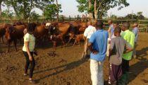 Kasaï Oriental: ferme agropastorale de Katupuila, un outil de développement signé Caritas Mbujimayi