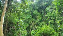 Projet d'Appui aux Communautés Dépendantes des Forêts en RDC: mission de la demande de titre de la concession forestière d'Apakola Kieke dans le territoire de Mambasa