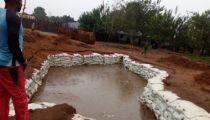 Mongala: encadrés par la Caritas,  des membres de Communautés s'attaquent efficacement à une tête d'érosion à Lolo