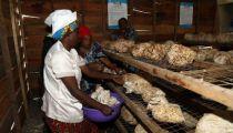 Maniema : Caritas-développement Kasongo dotée d'un centre de formation pour les ex-combattants