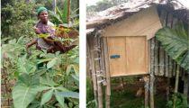 Projet d'Appui aux Communautés Dépendantes de la Forêt : lutte contre la pauvreté et la dégradation des forêts dans le Territoire de Walikale