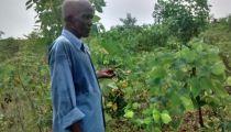 Appui à la sécurité alimentaire et renforcement des capacités économiques de ménages ruraux à Kisantu, en RDC :  Activités de démarrage lancées